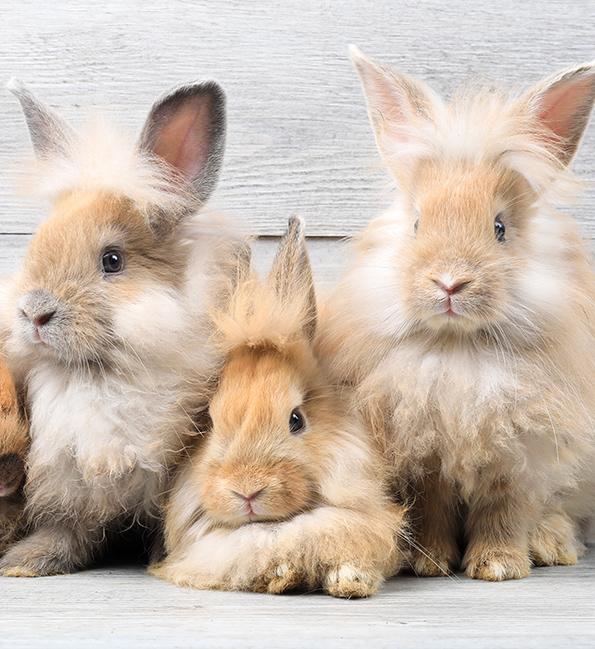 U nas kupisz wyjątkowe zwierzęta